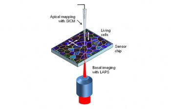 The instrument will combine two electrochemical imaging techniques which measure cell responses on the top and bottom layer